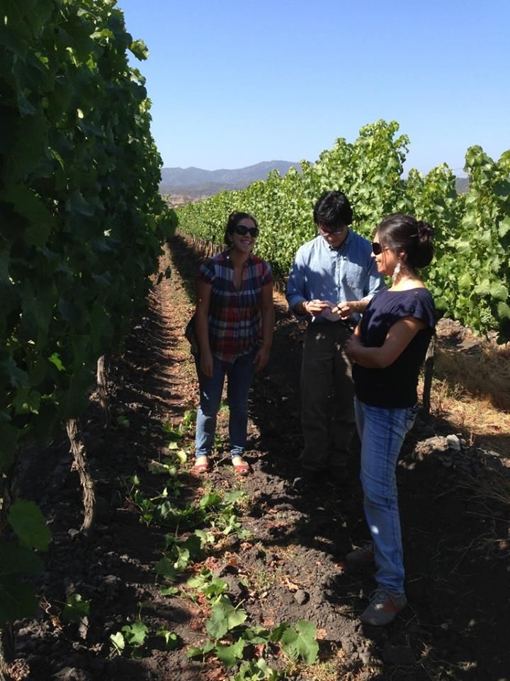Tour en Kingston Family Vineyards- Valle de Casablanca