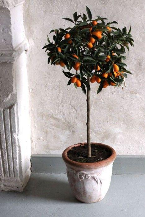 Plantas ornamentales en forma de cítricos recordando el Sur de España