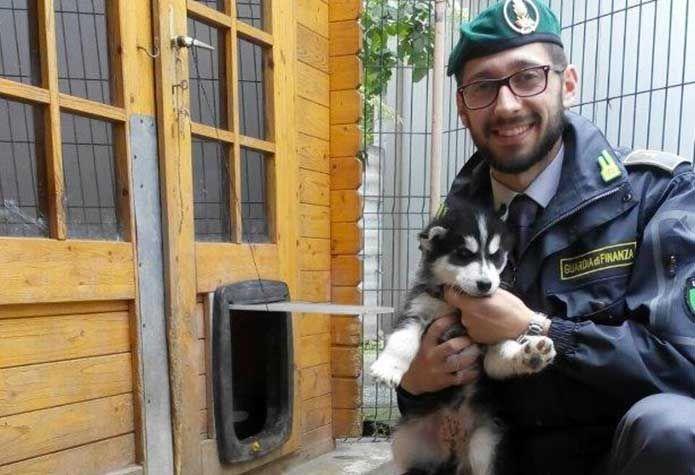 La Guardia di Finanza sequestra 10 cuccioli di Husky