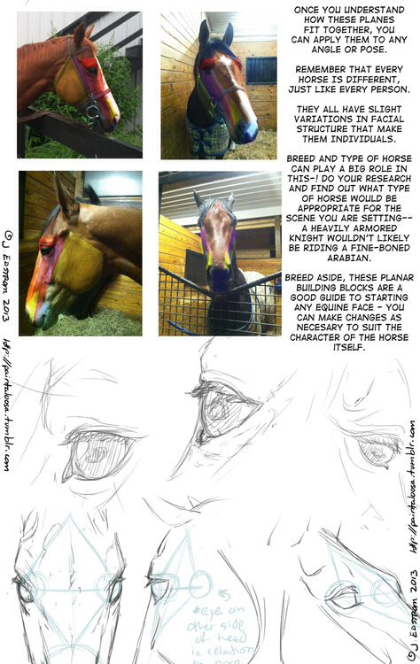 Drawing steps/tips Subject:horse structure part 3