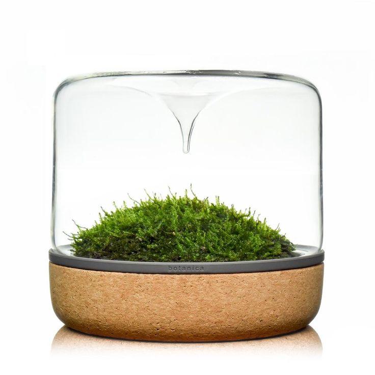 Sanctuary M Rainforest Cork Moss