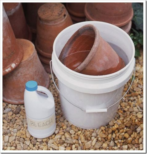 disinfect clay pots Clean Clay Pots Materials you will need: • White vinegar • Rubbing alcohol • Spray bottle • Stiff wire brush • Large bucket or wheelbarrow • Household bleach • 1/4-, 1/2-, 1-inch wooden dowels • 1-inch wood screws Disinfect and store clay pots. First, combine equal parts white vinegar, rubbing alcohol, and water in a spray bottle. Apply the mixture to pots, and scrub with a wire brush to remove salt deposits (white rings).