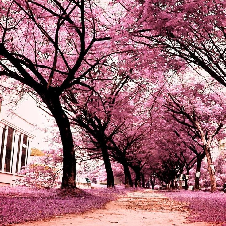 Follow the Way! Gorgeous! ♥