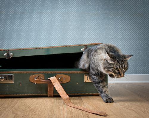 10 Cat-Friendly Hotels