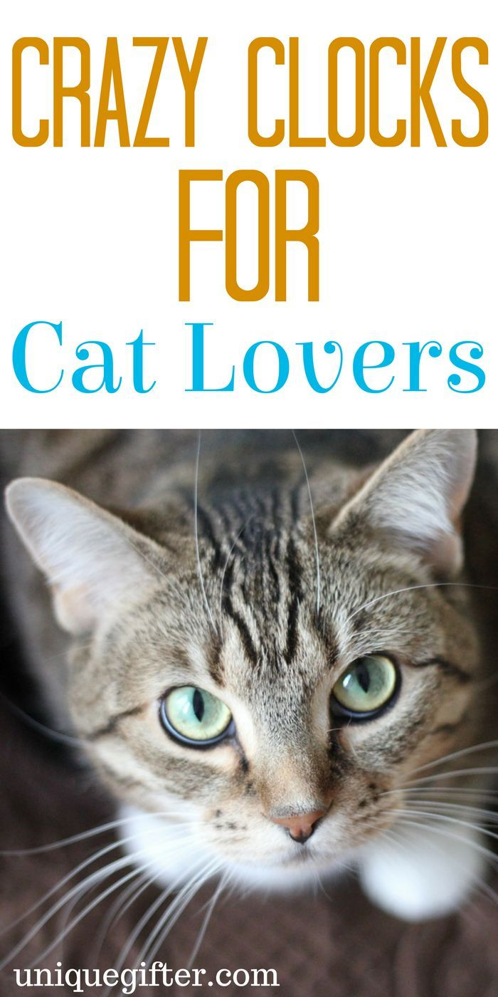 Crazy Clocks for Cat Lovers | Cat Lady gift ideas | Birthday presents for my cat | What to buy my cat loving roommate for Christmas | Silly Home decor | Stylish cat accessories | Fun ways to be a cat lady