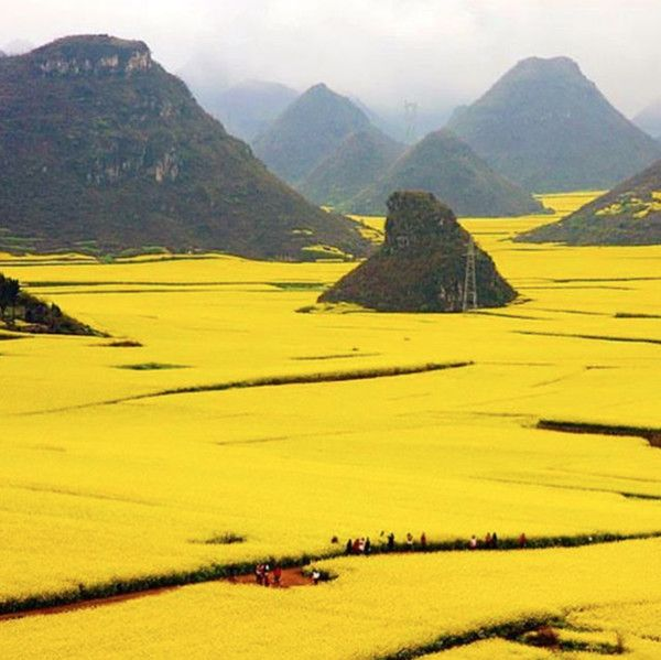 Canola Flower Fields; Yunnan, China - Find Your Escape In These Romantic and Enchanting Flower Fields - Photos