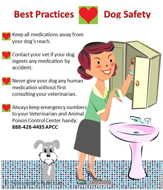 Best Practices to keep your dog safe from ingesting human medications via Schnauzers-Rule.com