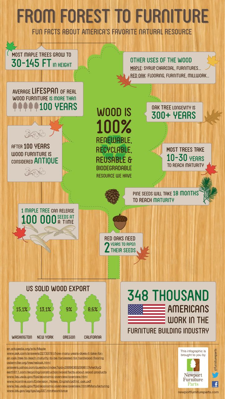 From Forest to Furniture Infographic! - By Newport Furniture Part #furniture #wood #infographic