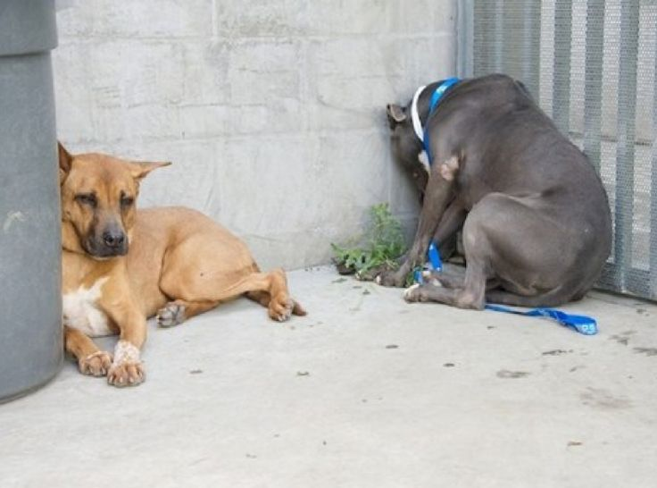 Dogs Facing Death Comfort Each Other At Shelter, Need Homes. Please pass them along. The shelter info is in the article.