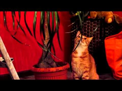 CAT LOVES CHEWING A PLANT!! :-D AHAHA!! - YouTube