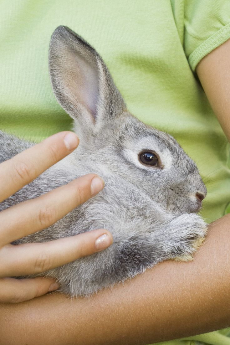 Canada Is One Step Closer To Banning Cosmetic Animal Testing