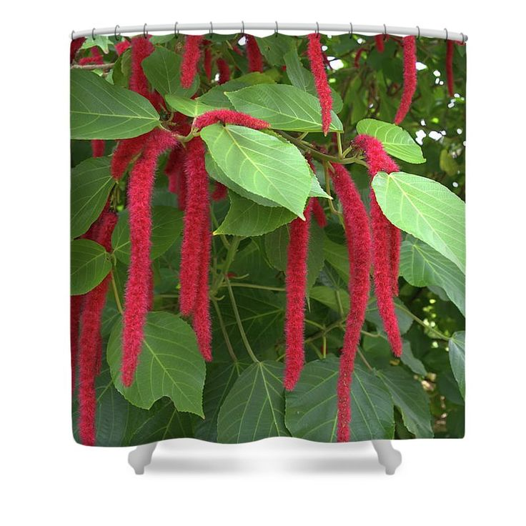 Chenille Plant Shower Curtain for Sale by Aimee L Maher Photography and Art Visit ALMGallerydotcom