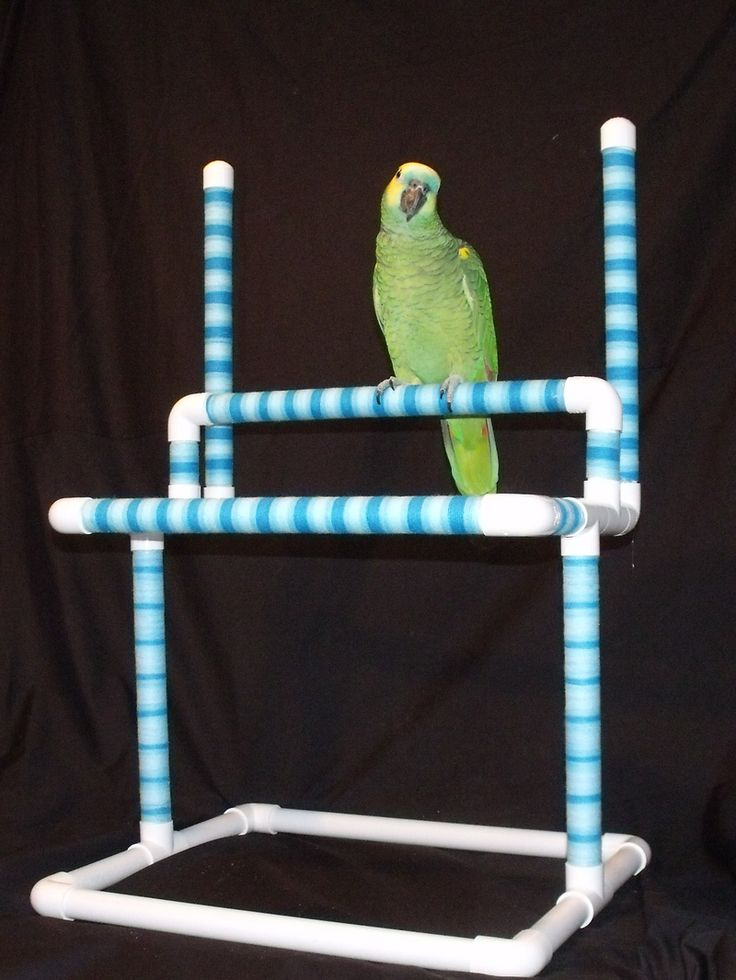 Home - PARROT TREASURES #pvc #parrot #perch #play #stands