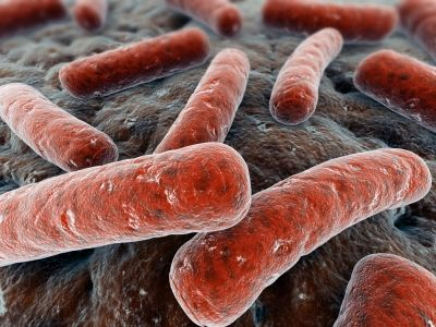 Will Probiotics Restore Good Bacteria for Kids?