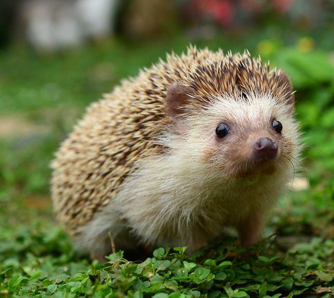 cute wild animals babies | The AJ List: Cutest Baby Wild ...