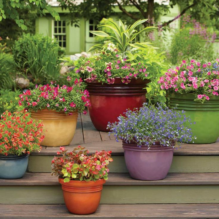 Container Gardening Ideas For Summer: How Does Your Container Garden Grow? Enter Our Refresh For