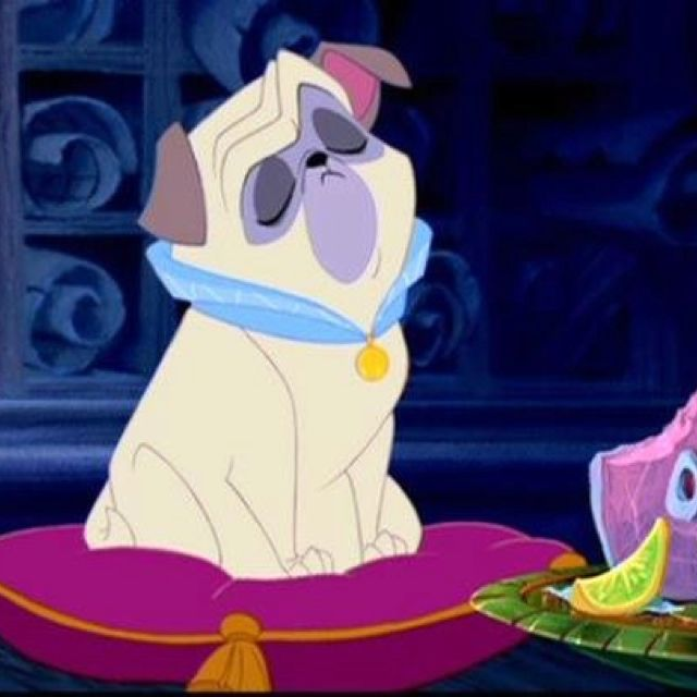 Percy the pug from Pocahontas! <3                                                                                                                                                                                 More