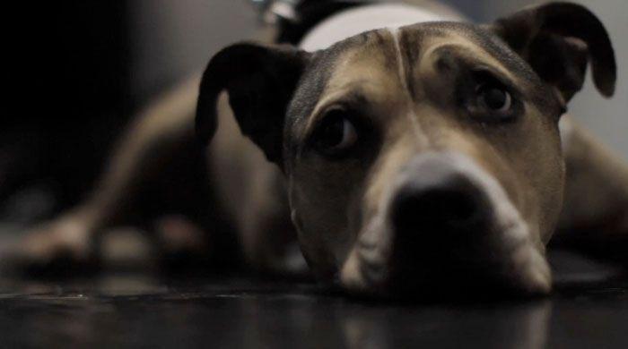 No se sabe por qué Jason Wood aceptó que el documentalista Eliot Rausch lo grabara con su videocámara ese día tan especial. Apenas seis minutos bastaron para mostrar la historia de amor incondicional entre un hombre y su mascota. Oden, el perro de Jason Wood, padecía cáncer desde hacía varios años. Su calidad de vida …