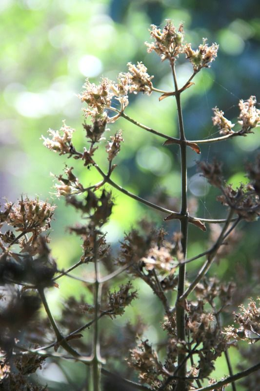 A plant that I found in Tree Lodge garden ©Ettione Ferreira