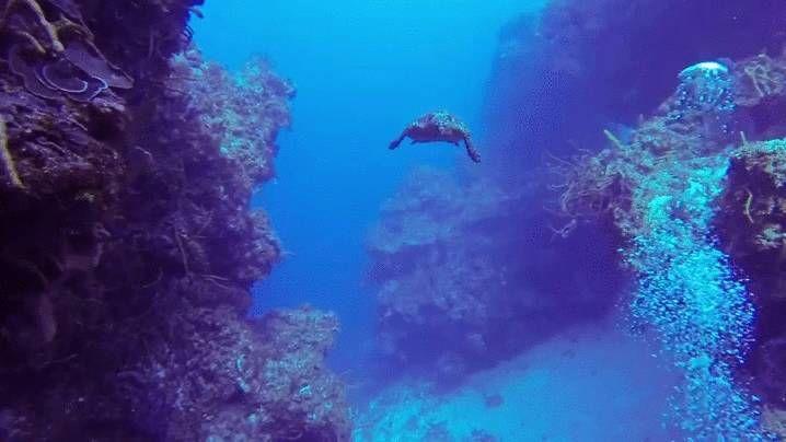 diving in cozumel. full video: https://youtu.be/S-lsOE7JKgI