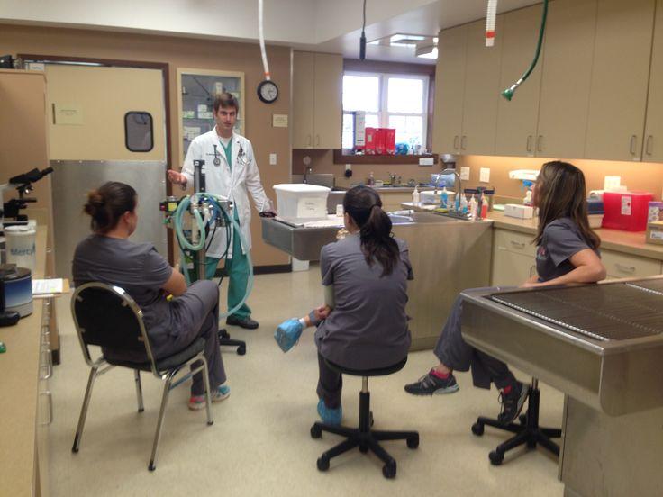 Staff training #rvt #dvm #foxcreekveterinaryhospital