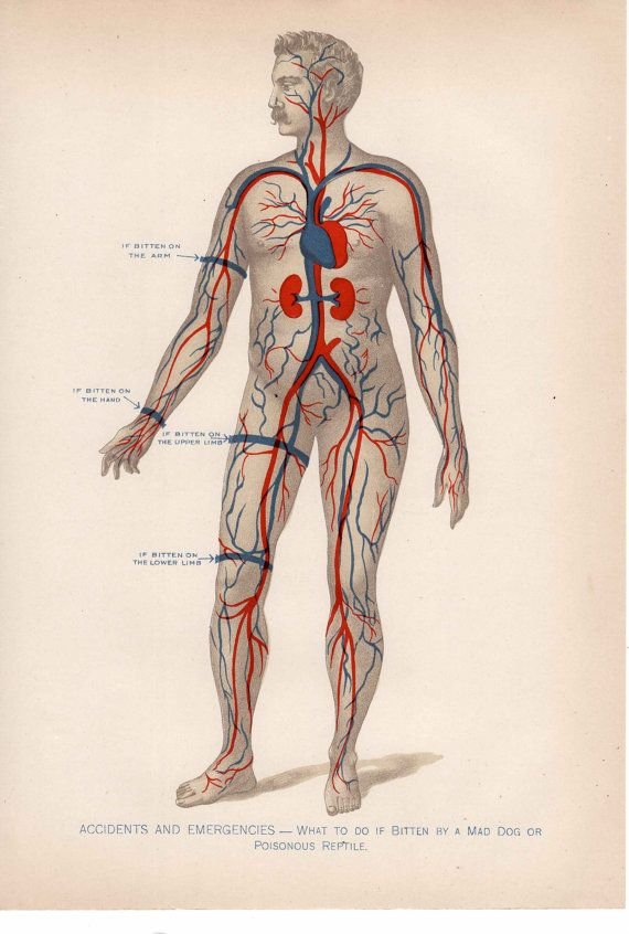 c. 1903 ACCIDENTS & EMERGENCIES lithograph - human medical anatomy ...