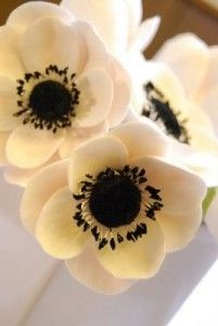anemone flowers. Love the cream color with the black.