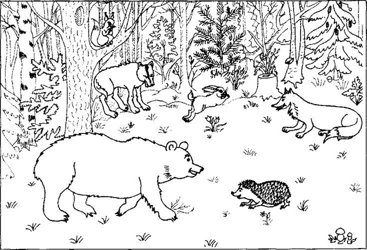 Птицы и животные раскраски детские: Дикие животные зимой раскраска