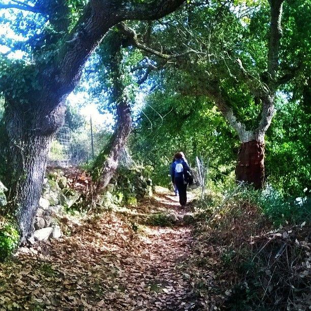 Il bosco in autunno ha colori speciali #locandaminerva #monteminerva #monteminervaexperience #villanovaMonteleone #vacanzeverdi #discover_sardinia #exploringtheglobe #exploring_sardinia #sardegnacountry #sardegnaisoladaimillevolti #turismo_attivo #turistapercaso #trekking #passeggiate #natura #viaggioinsardegna