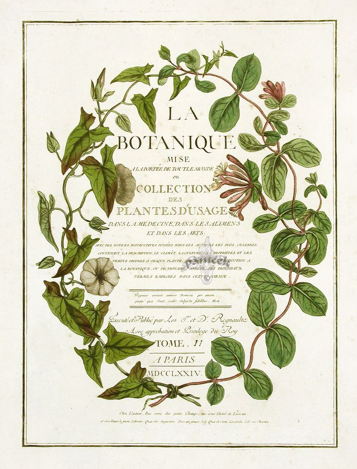 LOUISE!  Look at this one!  This is beautiful!  Something like this might be cool for the logo.  Like a botanical wreath circling my business name?  Might look cool to have on the FB timeline too.  Maybe a botanical design like this creeping around a couple photos?