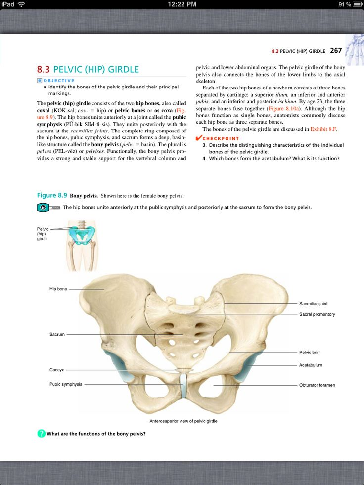principles of anatomy and physiology chapter 8 the skeletal system the appendicular skeleton. Black Bedroom Furniture Sets. Home Design Ideas