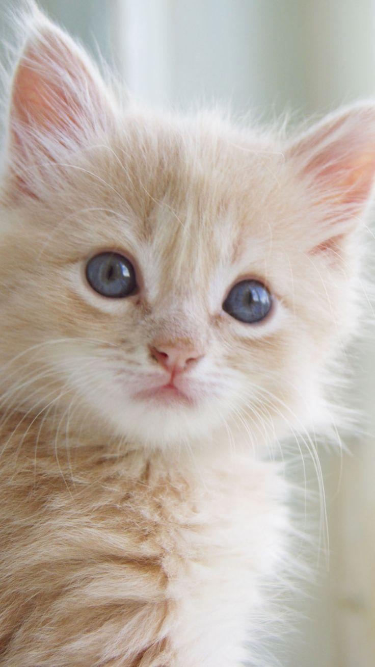 Best 25 Kittens cutest ideas on Pinterest