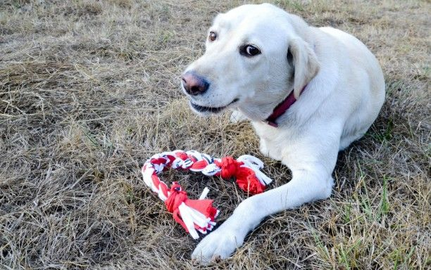 How to make a dog toy of an old  t-shirt