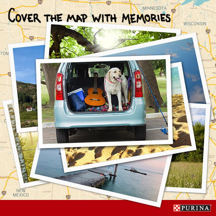 Planning a road trip with your dog? Make the trip a smooth one with these tips on traveling with your dog!