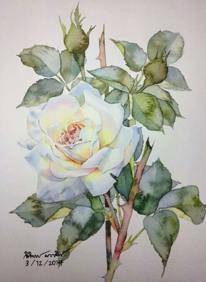 Roses by Ti Watercolor