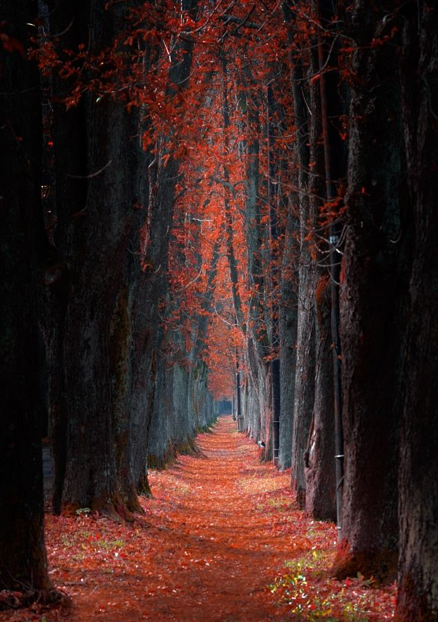 Red Pathway | autumn in Bosnia and Herzegovina | by Mevludin Sejmenovic~~