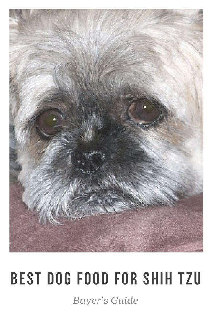 Best Dog Food For Shih Tzu Honden