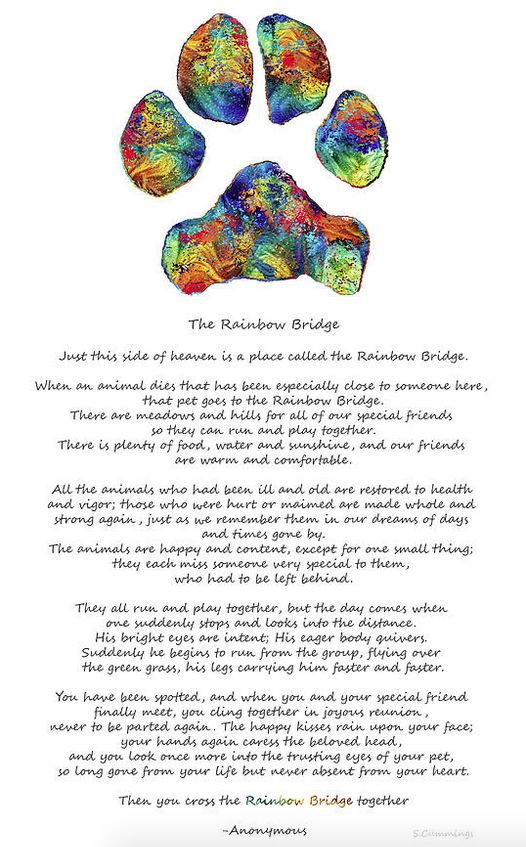 The Rainbow Bridge... blog and art by Sharon Cummings sharoncummings.wordpress.com #blogger #rainbowbridge #dogpaw