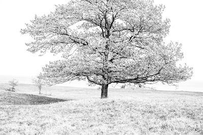 Erika Olofsson - Tree of life