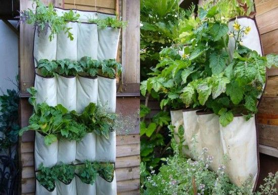 Hanging shoe rack used for herb garden.
