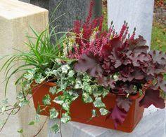 Bepflanzter Blumenkasten 40 cm wintergrün