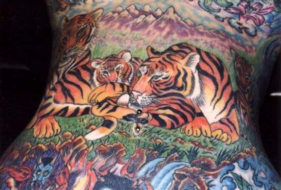 Tigers on a belly