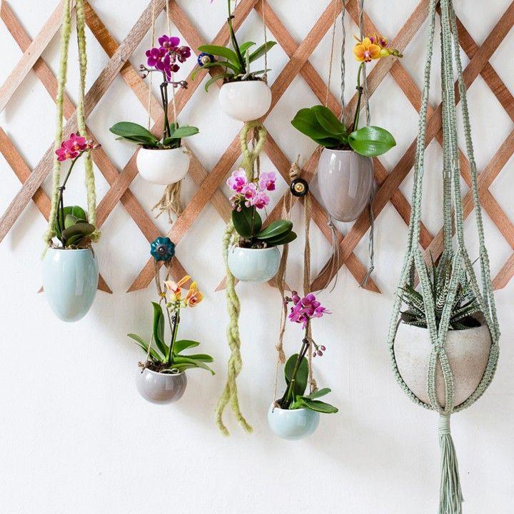 Lege of saaie muur over? Maak zelf een hangplantenrek voor aan de wand, helemaal van nu! #intratuin #orchidee #Phalaenopsis #bungelen #pintratuin
