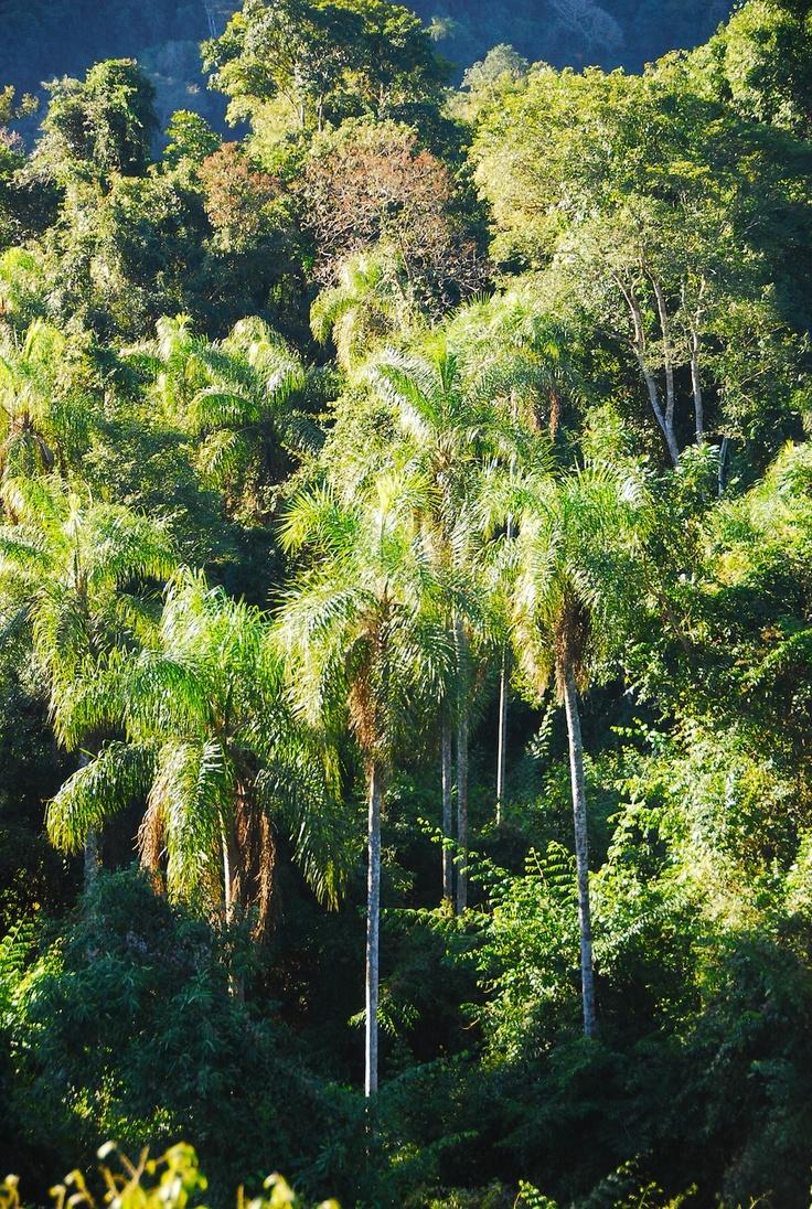 La selva, Misiones