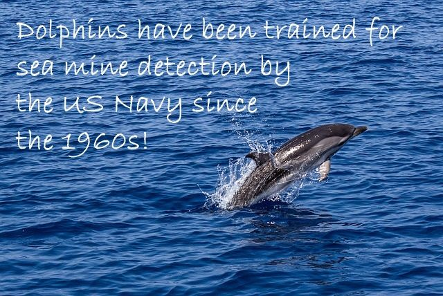 Did you know military dolphins exist?!  Find out more in the most recent Vlog...  #dolphins #military #navy #conservation #marine #sealion #vlog #youtube #blog #blogger #vlogger #environment #ocean #sea