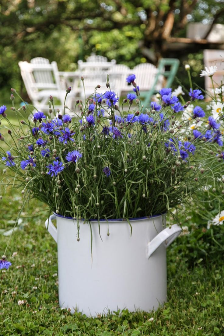 Love,love love these blue bachelor button flowers and the enamel container...