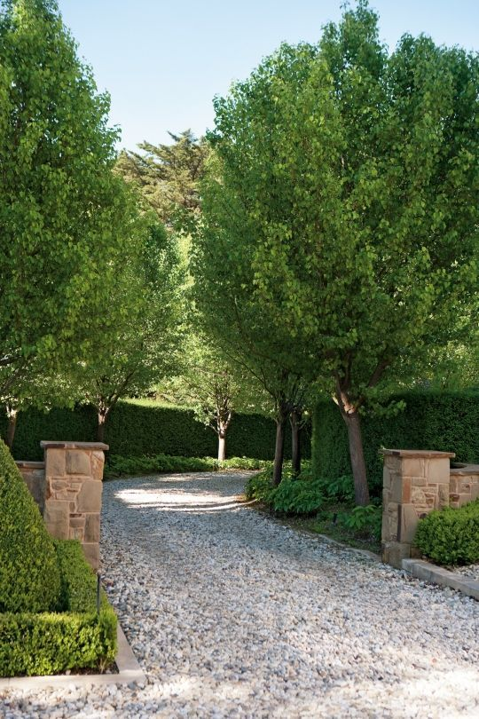 Paul Bangay's top tips for your garden - Vogue Living                                                                                                                                                     More