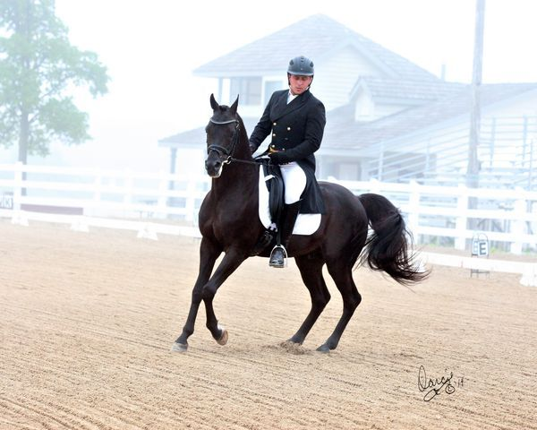 The 2016 East Coast Arabian Championships | The Arabian ...