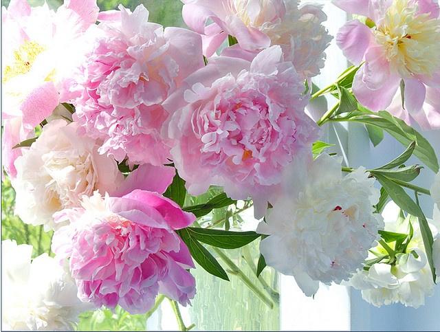 Peonies in a Vase by judy stalus, via Flickr