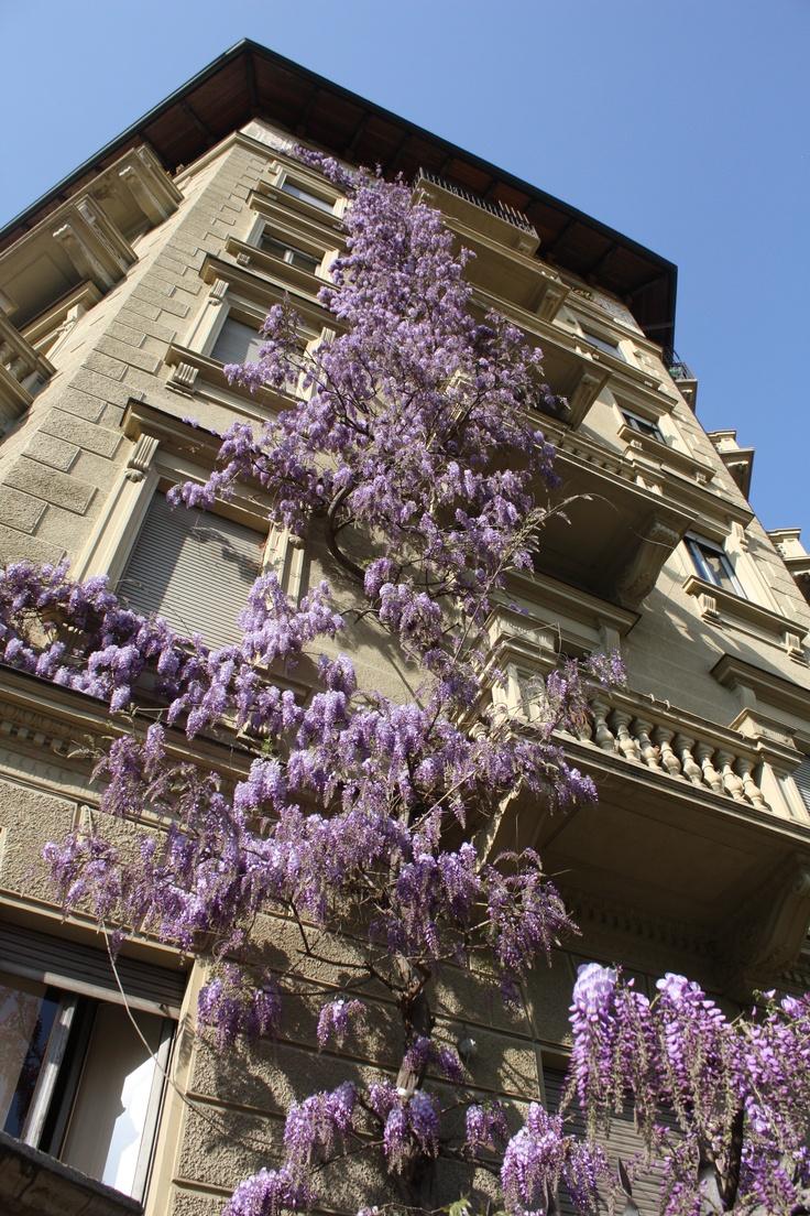 Corso San Maurizio - Torino